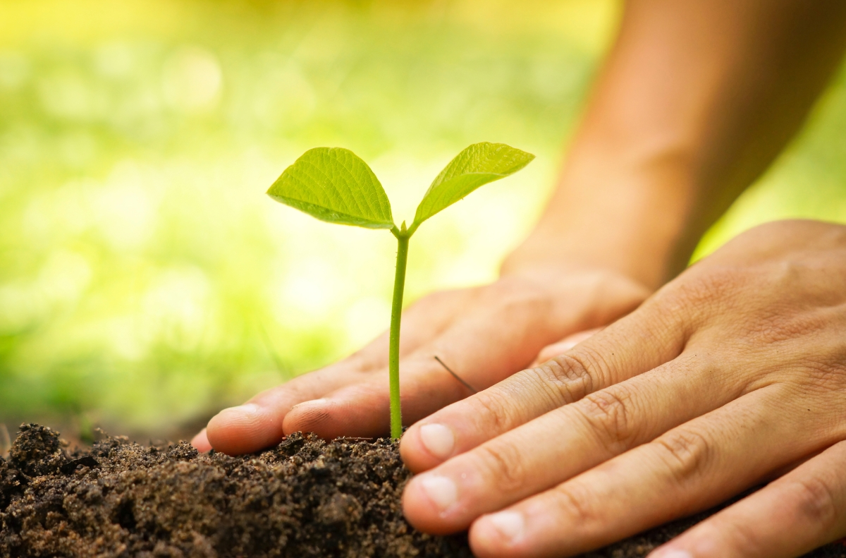 Beyond Treatment: Let's Not Forget About TheSoil